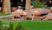Flamingo Las Vegas Hotel Garden
