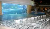 Golden Nugget Hotel and Casino Fish Tank