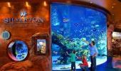 Silverton Casino Hotel Fish Tank