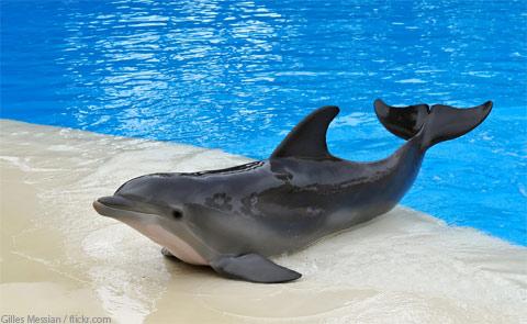 Secret Garden and Dolphin Habitat Las Vegas NV